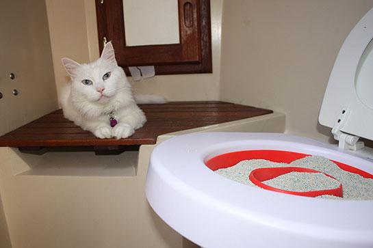 kedi tuvalet eğitimi ile ilgili görsel sonucu